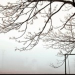 vreme rece8